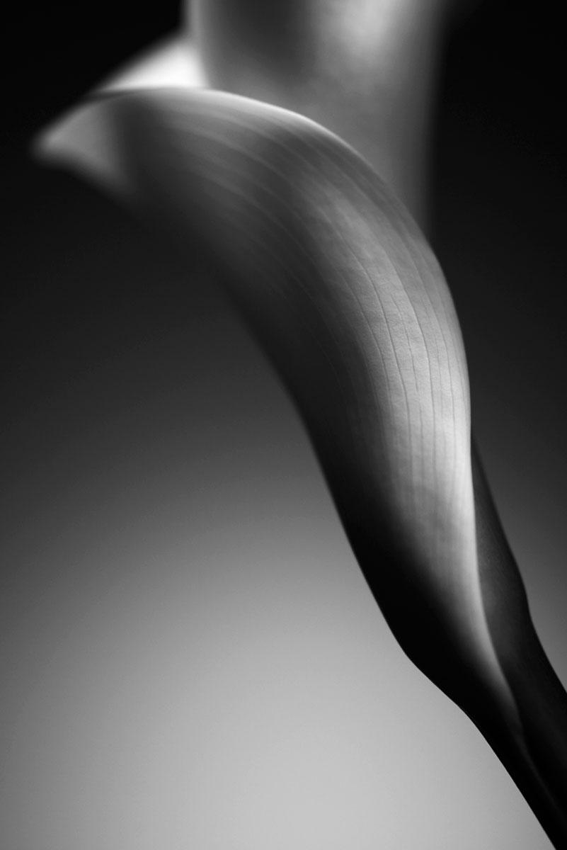 Fine Art Fotografie – Calla Schwarzweiß